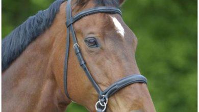 Photo of Fantastisk rideudstyr til dig og din hest