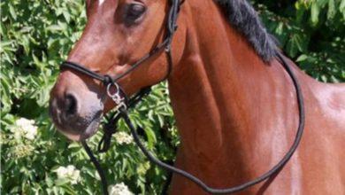 Photo of Køb ridebukser, happyhorse.dk, ridebukser til alle for en god pris
